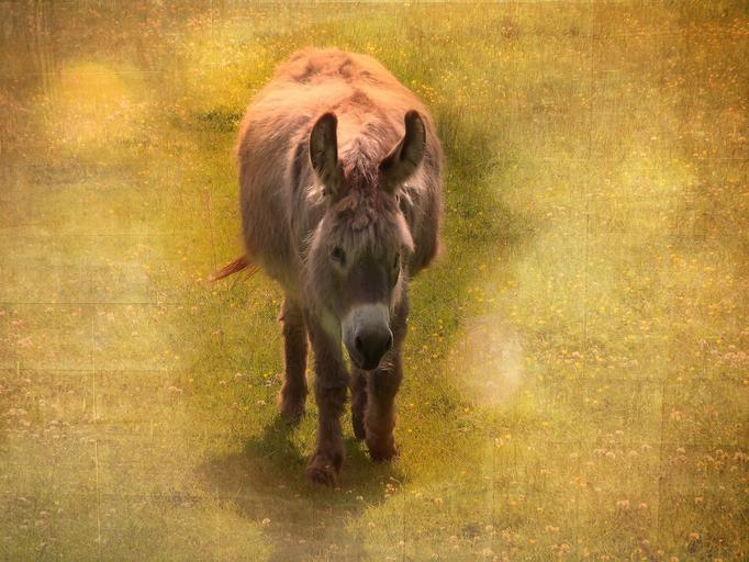 The Majestic Purpose of the Donkey